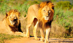 Escorted coach tours in Africa