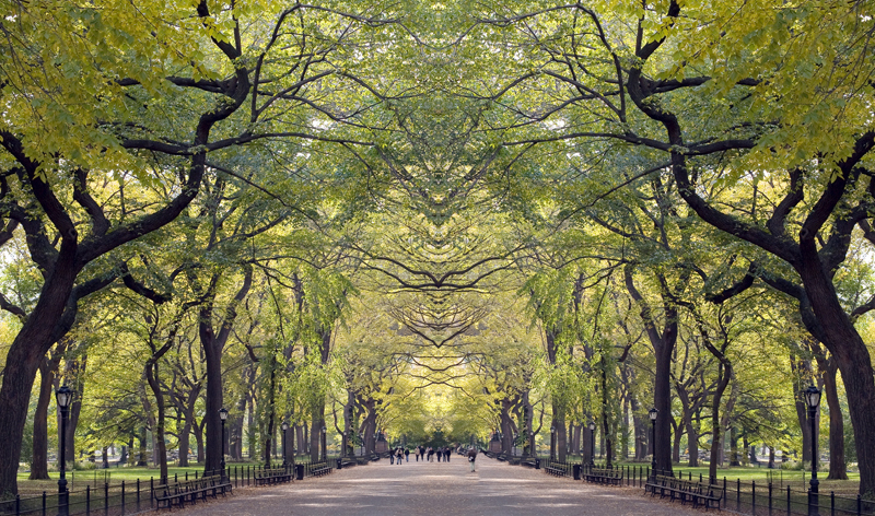 home alley in central park in new york city new york usa vacation packages