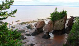 Overlooking the Flowerpot rocks at Hopewell Rocks - Fredericton, New Brunswick, Canada