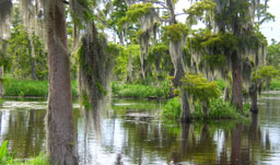 Deep Bayou Country - Alexandria, Louisiana, USA