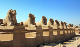 Statues of Sphin - Luxor, Egypt