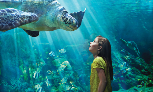 Seaworld girl and turtle