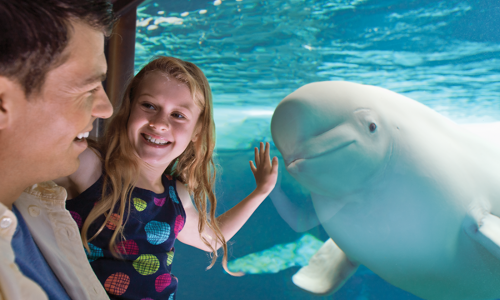 Kissimmee Seaworld Slideshow
